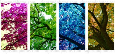 "Four Colored Tree 4 piece set  Canvas  18.5""x45"".  4 panels"