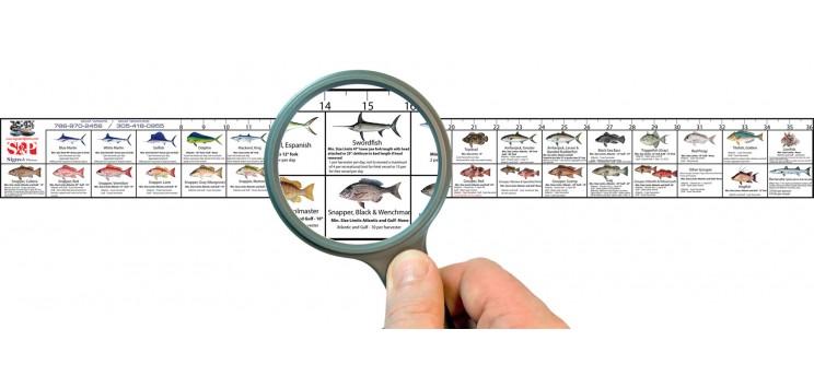 Florida Saltwater Fishing Regulation Ruler