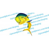 Bull Dolphin decal