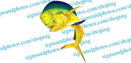 Bull Dolphin decal