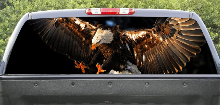 Rear Windows Graphics Bald Eagle
