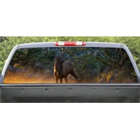 Rear Windows Graphics Deer River