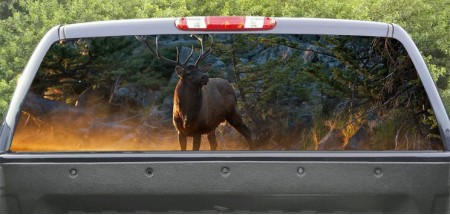 Rear Windows Graphics Deer River