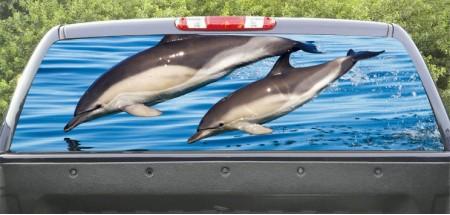 Rear Windows Graphics Dolphin