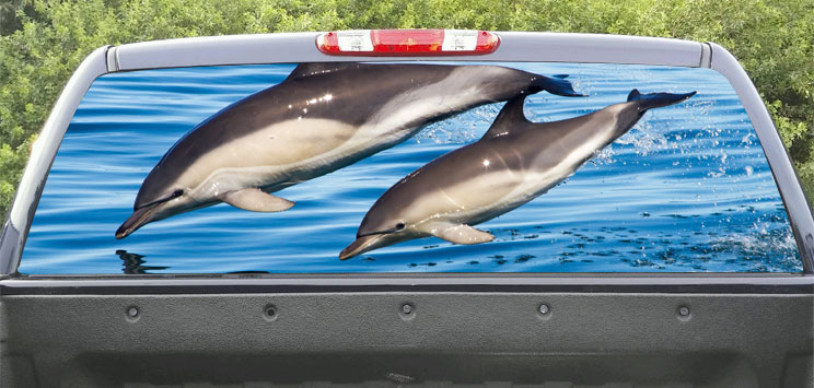 Rear Windows Graphics Dolphin