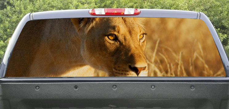Rear Windows Graphics Lioness