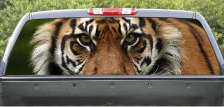 Rear Window Graphic Tiger Closeup
