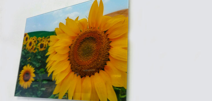 "Wall Glass Art Girasoles Siena 16"" x20"""