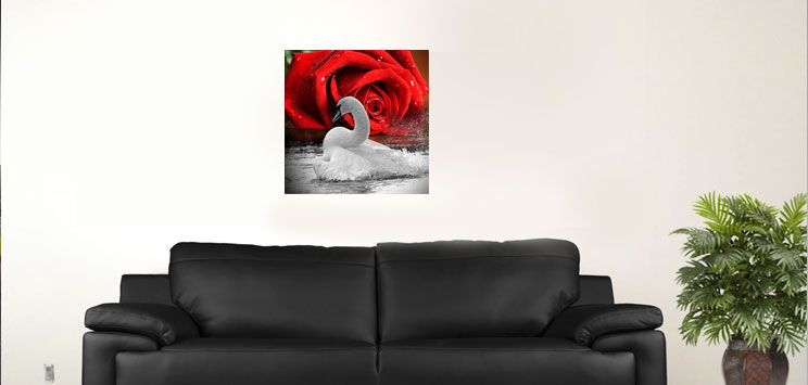 "White Swan and red rose L. 18""x18"""